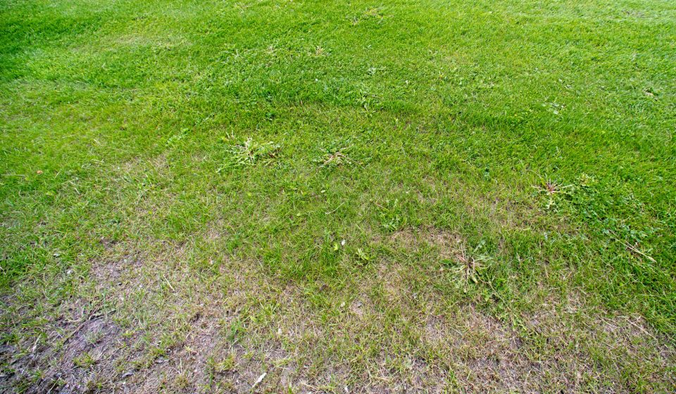 dry-patches-lawn
